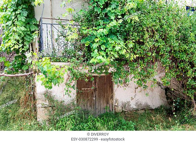 Old balcony being over run by Vines