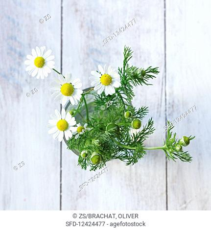 Chamomile with flowers