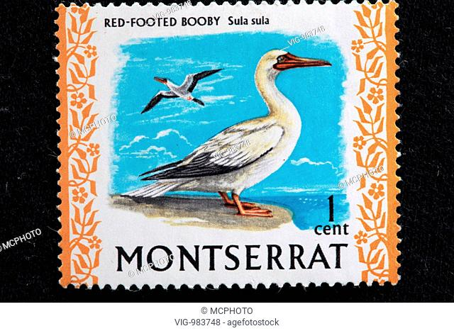Red-footed Booby (Sula sula), postage stamp, Montserrat . - Montserrat, 09/01/2007