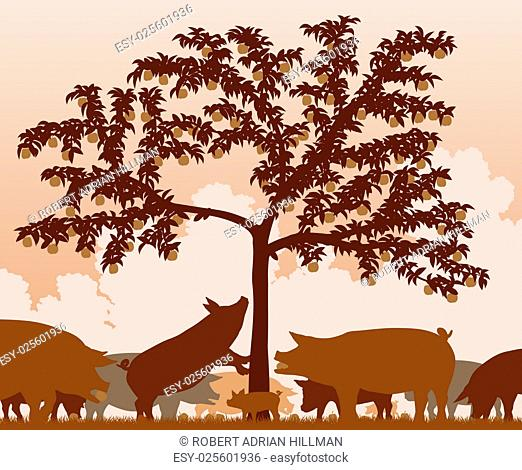 Editable vector illustration of free-range pigs feeding under an apple tree with all figures as separate objects