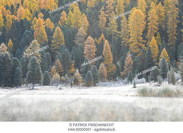 Lärchen- und Fichtenwald am Stazersee, Schweiz