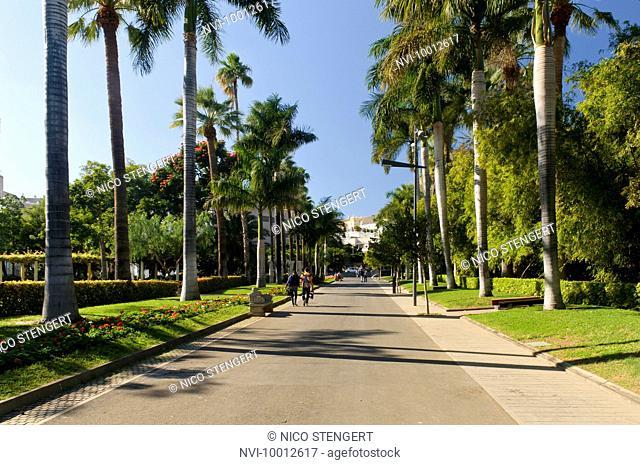 Palm avenue in the Parque Garcia Sanabria, Santa Cruz, Tenerife, Canary Islands, Spain, Europe