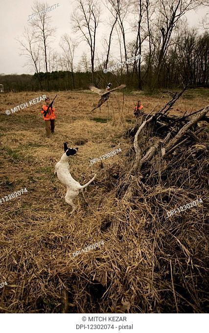 Female Upland Bird Hunting