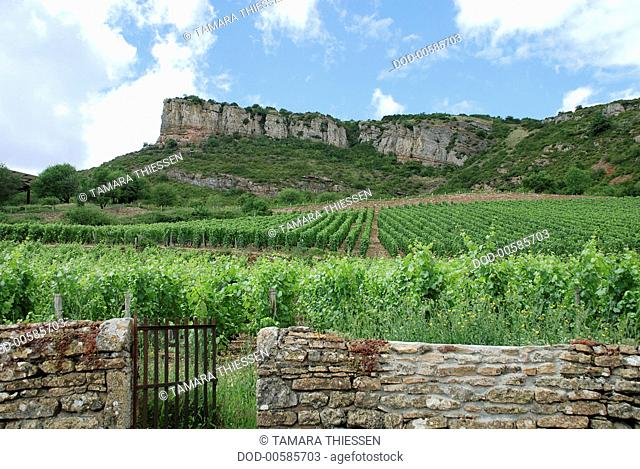 France, Burgundy, Roche-de-Solutre, rock formations above vineyards