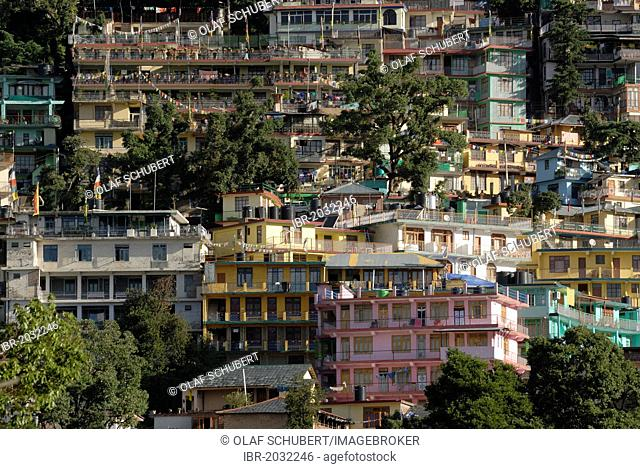 Residential buildings of exiled Tibetans with cedars, Upper Dharamsala, McLeod Ganj, Himachal Pradesh, Himalayas, India, Asia