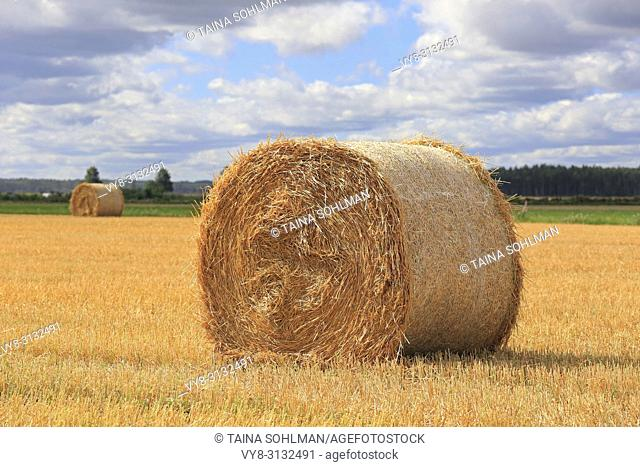 Agricultural landscape of a golden straw bale on stubble field on a beautiful day of early autumn