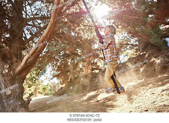 Boy swinging on a rope in backlight