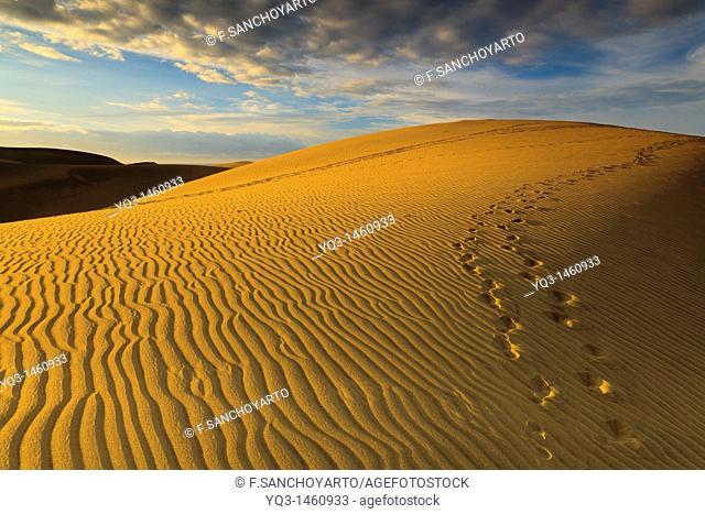 Dunes of Maspalomas at sunrise, Gran Canaria, Canary Islands, Spain