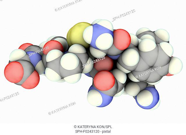 Oxytocin hormone, molecular model