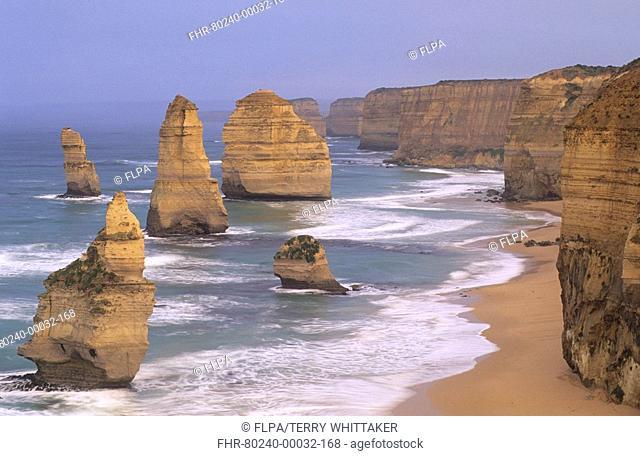 Limestone sea stacks, The Twelve Apostles, Port Campbell N P , Great Ocean Road, Victoria, Australia