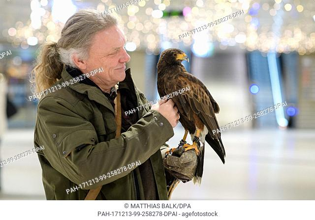 Harris' hawk Hillary sits on the arm of falconer Guenther Rau at the Stachus passage in Munich, Germany, 13 December 2017