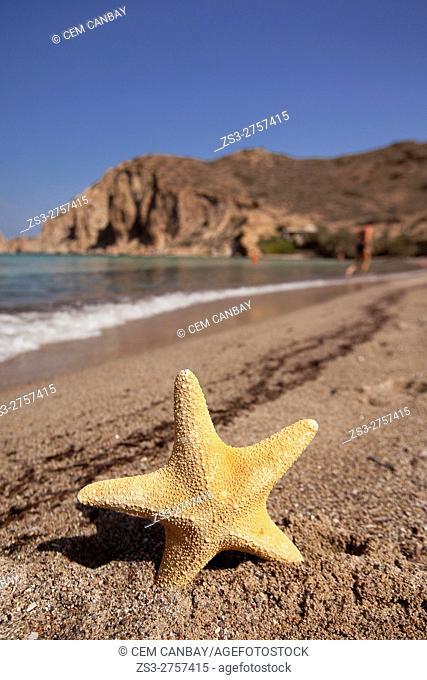 Starfish on the sand in Plathenia beach, Milos, Cyclades Islands, Greek Islands, Greece, Europe