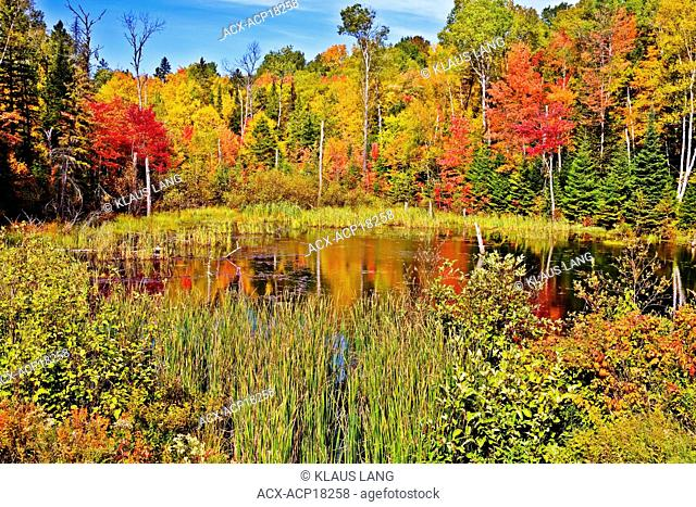 Pond in Algonquin Park in fall, Ontario, Canada