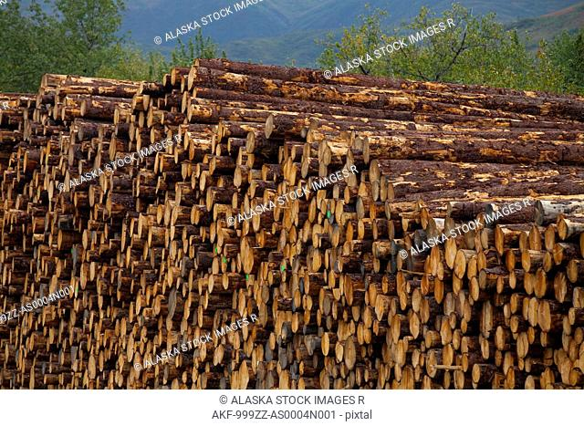 Stacked Sitka Spruce logs harvested from Chiniak area, Kodiak Island, Southwest Alaska, Fall