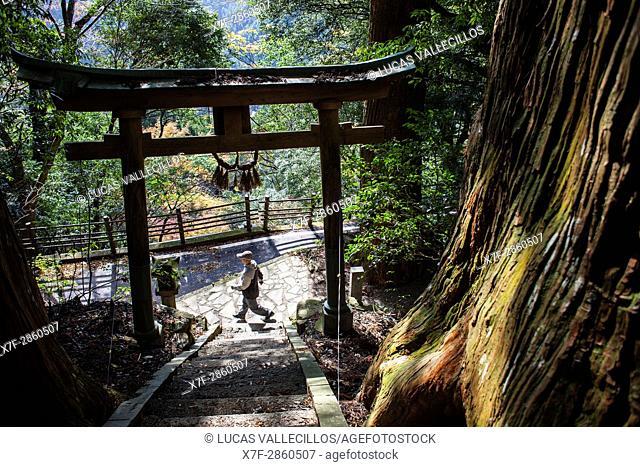 Tsugizakura-oji, Nonaka Village, Kumano Kodo, Nakahechi route, Tanabe, Wakayama, Kinki, Japan