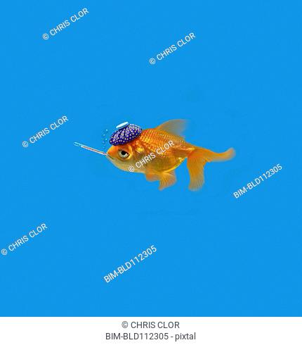 Goldfish with thermometer and hot compress