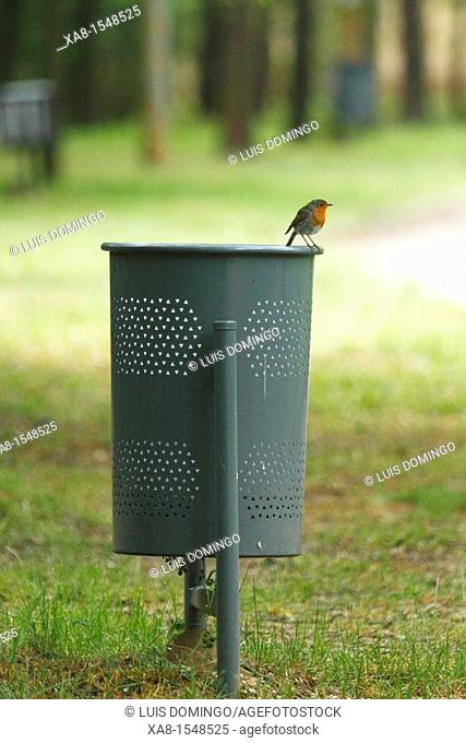 A robin sits on a paper