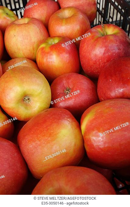 A carton of red apples