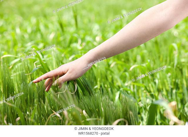 a woman touching hay in the field