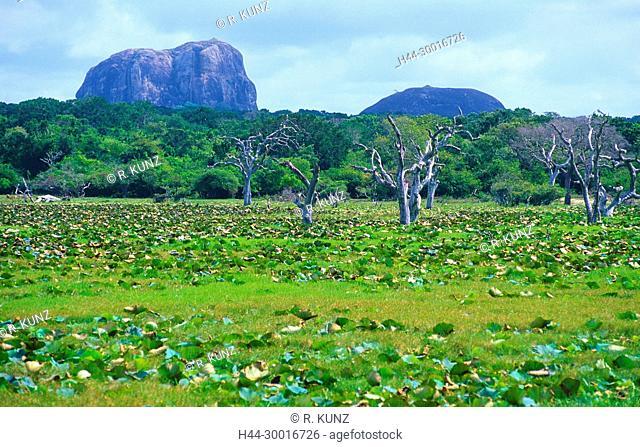 Marsh, dead trees, rainforest, mountains, Yala National Park, Sri Lanka