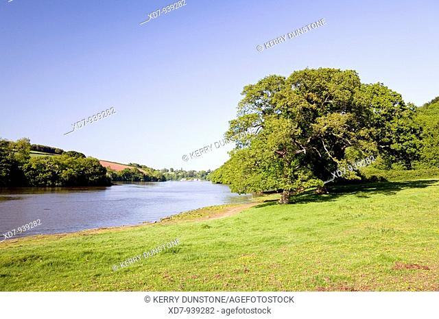 England Devon Dart Valley Bow Creek with large oak trees