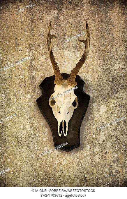 Mounted Bucks Head