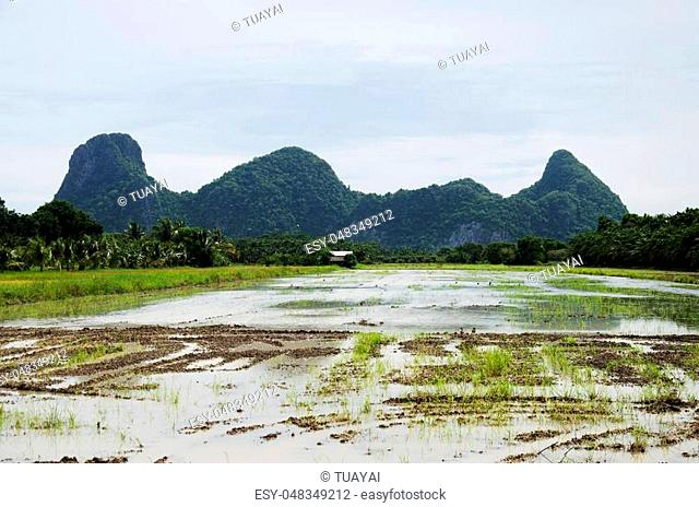 Khao Oktalu Mountain or The Hole Mountain with rice field and reflection on water in paddy at Phatthalung province of southern Thailand