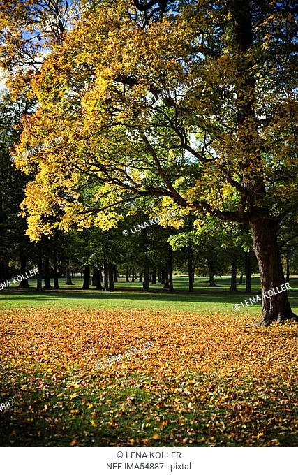 Autumn, Stockholm, Sweden