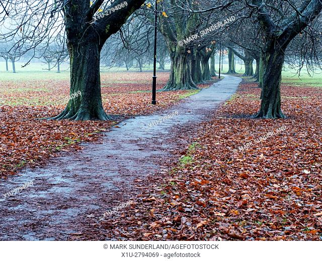 Path through Fallen Leaves under an Avenue of Trees on The Stray Harrogate North Yorkshire England
