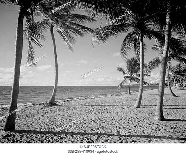 USA, Florida, beach and palm trees