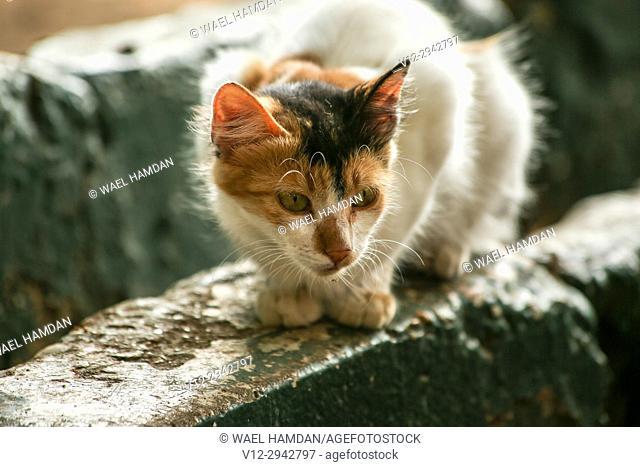 Stray cat on street, Egypt