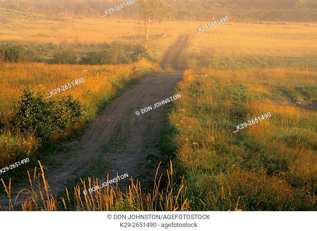 Country road at dawn, Burwash, Ontario, Canada