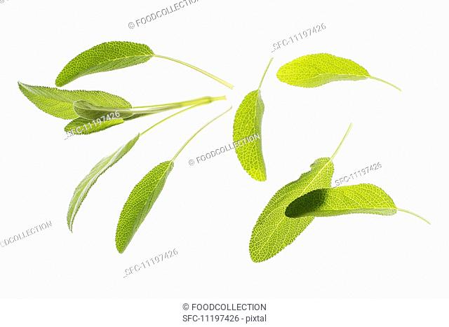 Several fresh sage leaves