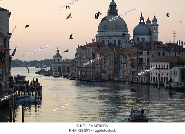 Pigeons, Grand Canal, Venice, Italy