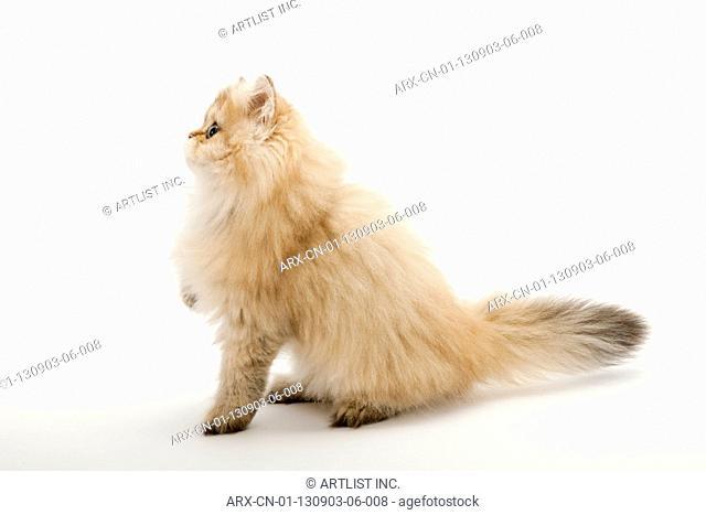 A sitting kitten looking left