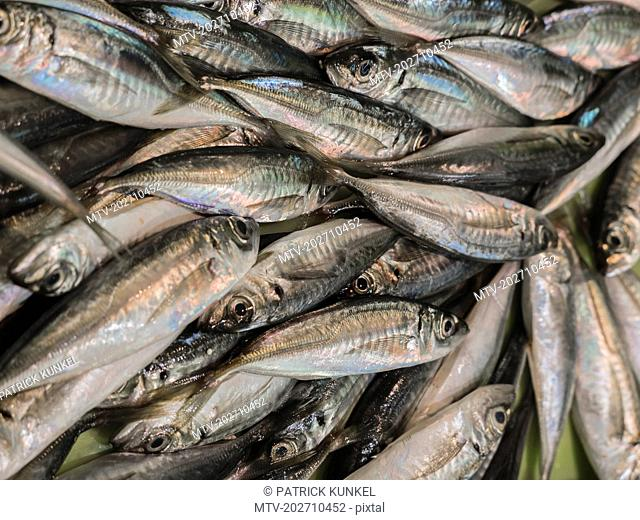 European pilchard for sale at fish market