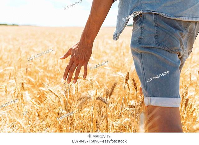 A man is on a wheat field and holds his hand over the ears, close-up hand holding wheat