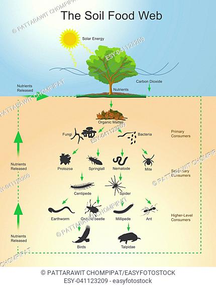 The soil food web is the community of organisms living all or part of their lives in the soil. It describes a complex living system in the soil and how it...