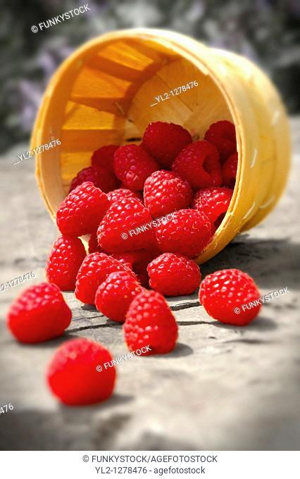 Punet of fresh picked raspberries