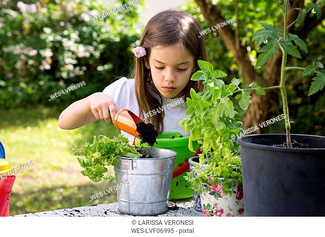 Portrait of little girl potting parsley on table in the garden