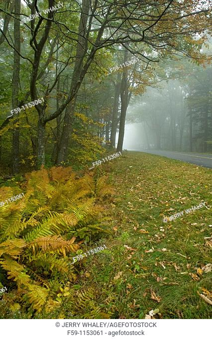 Autumn, Blue Ridge Parkway, Western NC