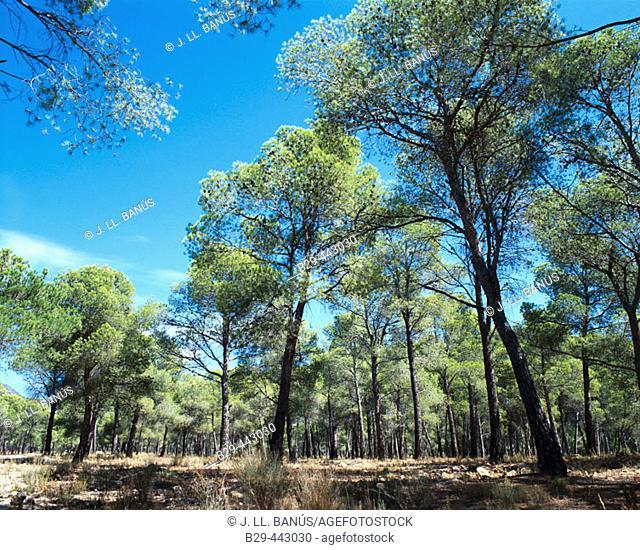 Sierra de Espuña. Murcia. Spain