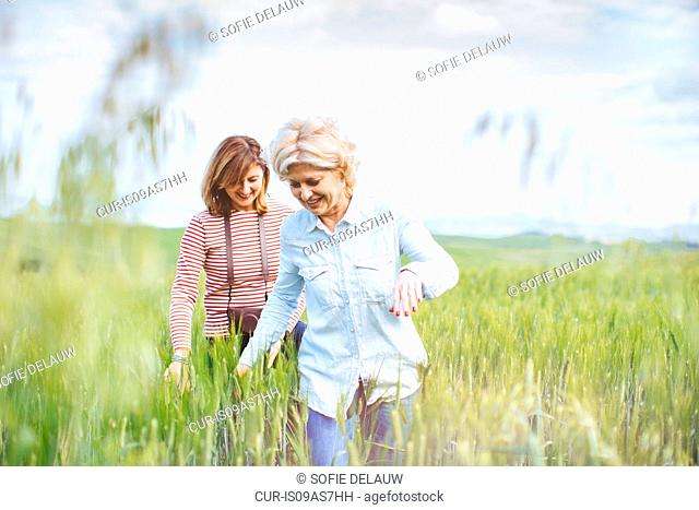 Two mature female friends walking in wheatfield, Tuscany, Italy