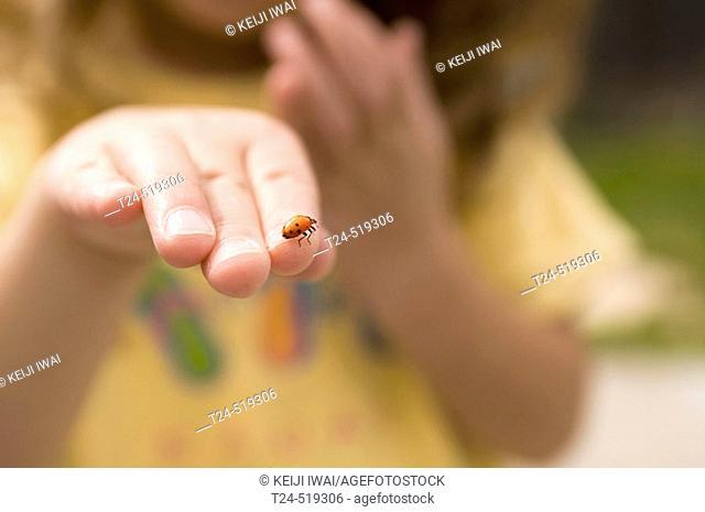 3 year old holding ladybug, Flagstaff, Arizona, USA