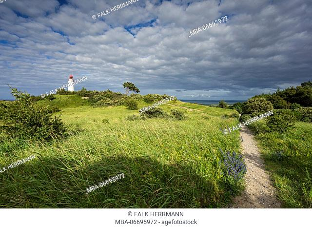 The highland of the island Hiddensee with single trees on the natural meadow, summer on the Baltic Sea