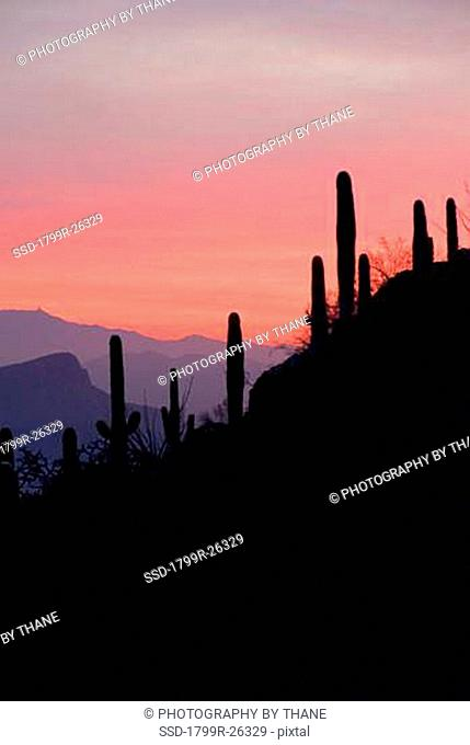 Sunset over Avra Valley from the Tucson Mountains, Tucson, Arizona, USA