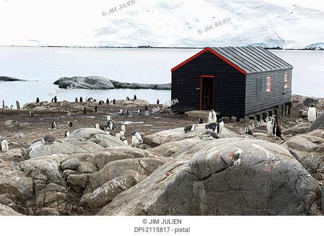 Penguins around a black building on the water's edge, port lockroy antarctica