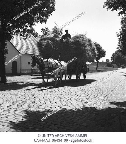 Heuwagen auf dem Lande, Deutschland 1930er Jahre. Hay cart in the countryside, Germany 1930s