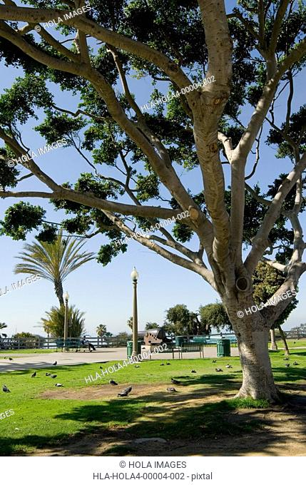 Park in Santa Monica, California