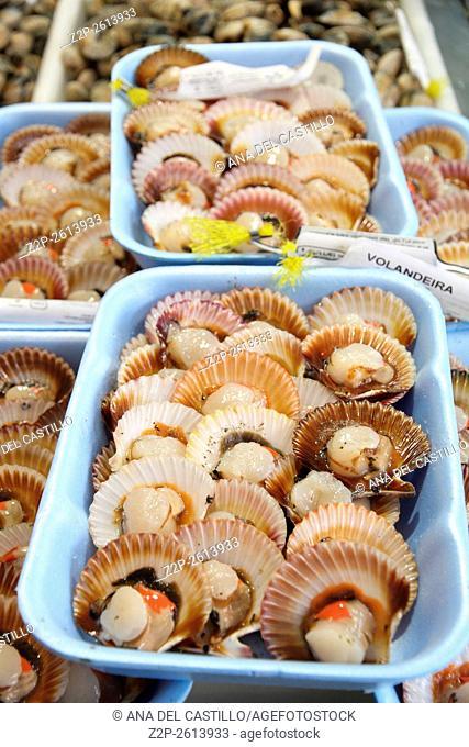 Scallops Galicia market Spain Volandeiras shells